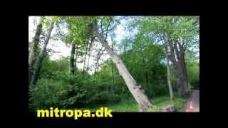 Sommerstormen væltede træer på Slotsgaden i Møgeltønder
