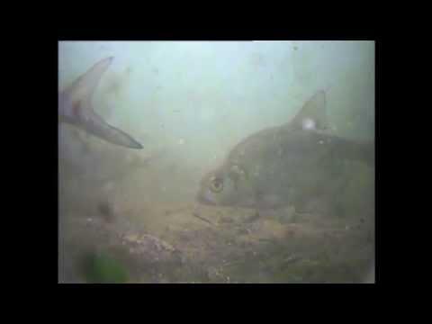 Видео: Съемка на камеру домашнего минета от развратной