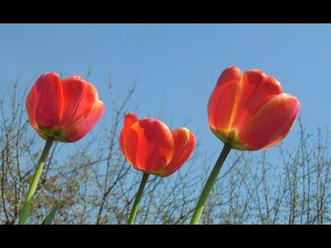 песня весну звали лето ждали слушать текст
