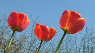 Весна пора любви! Очень красивая песня про весну и про любовь!