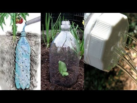 You Will Never Throw Away Plastic Bottles After Watching This