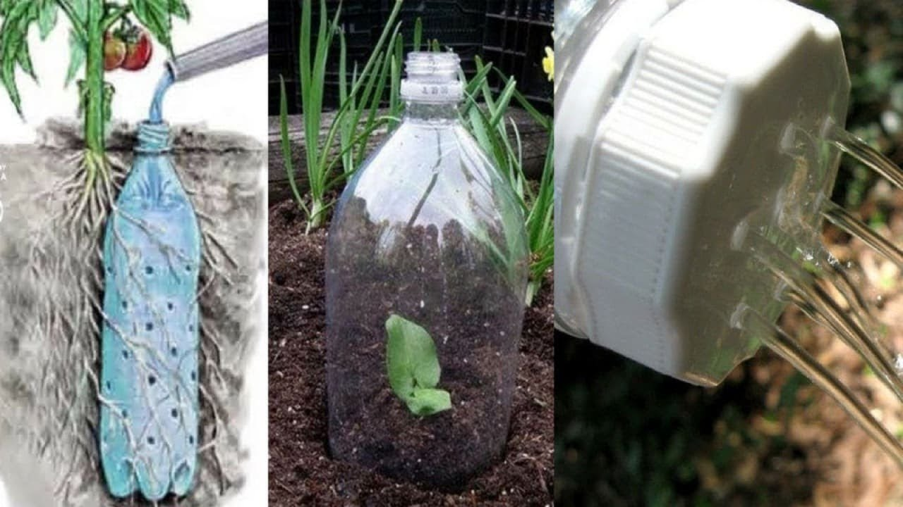 You Will Never Throw Away Plastic Bottles