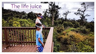 The life juice - Coffee plantation | Hawaii FPV