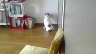 うちの犬は時々壁に向かってうなだれています。心配になります。名前は...