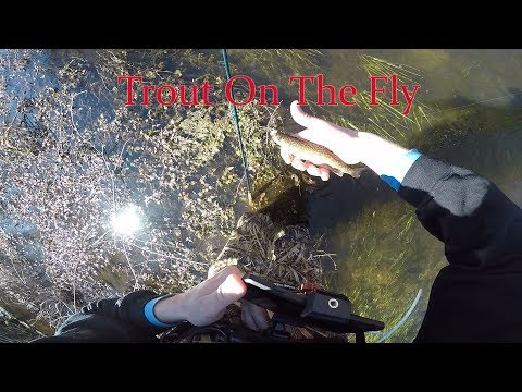 Long Island Trout On The Fly