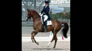 Konie to moja pasja. ;)
