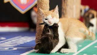 Cat-lete of the Week - Davey - Episode 7 - Hallmark Channel thumbnail
