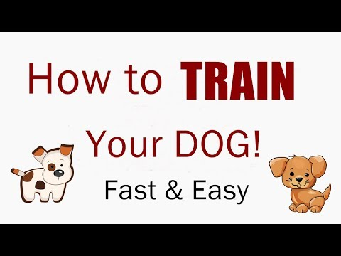 how-to-train-your-dog.-improve-intelligence,-develop-obedience-and-eliminate-bad-behavior.