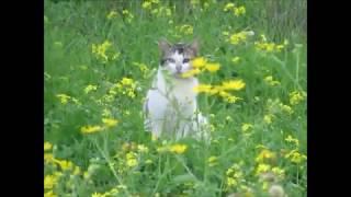 Израильские уличные кошки зимой!Кирьят-Ям.Израиль.Israel.