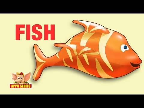 Animal Facts - Fish