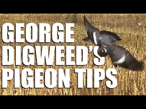 Fieldsports Britain - George Digweed's Pigeon-shooting Tips