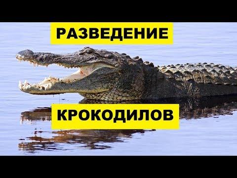 Разведение Крокодилов как бизнес идея