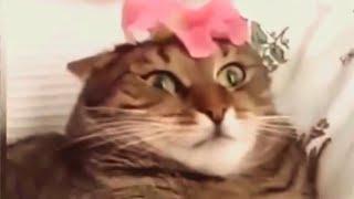 Śmieszne koty [#15]