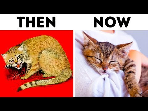 How Cats Domesticated Us Twice