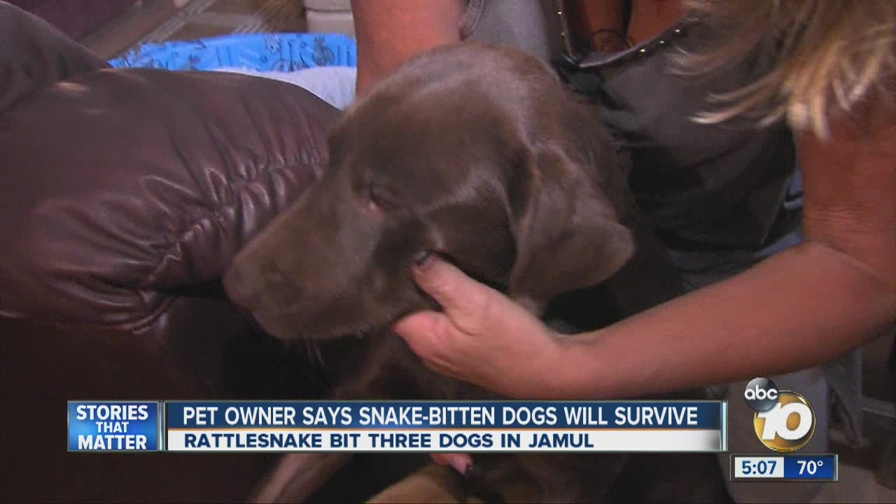 Pet owner says snake-bitten dogs will survive