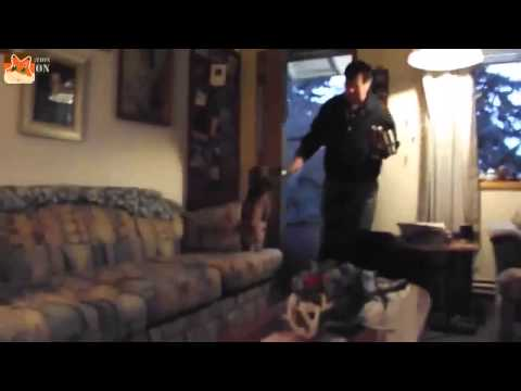 Dogs Welcoming Owners Home Compilation 2014 HD