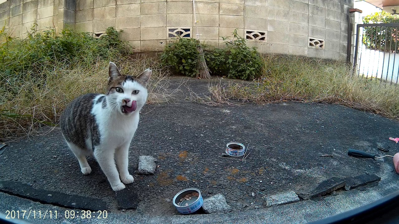 VICTURE AC200 ACTION CAM: My local stray cat eating tuna