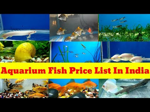 Aquarium Fish Price List In India 2019 | Aquarium Fish Prices With Name's