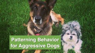 Dog Aggressive Dog-place Command & Patterning