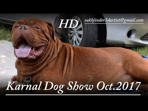 Karnal  INDIA  Dog Show October 2017