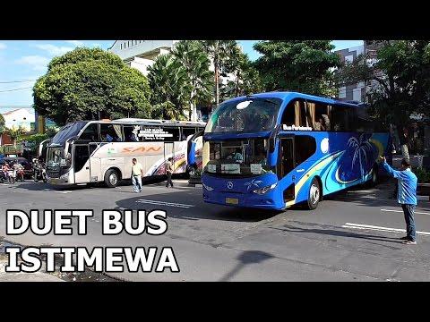 Bus Pariwisata Langka | Duet SAN SLiner dan PHB Trans Nusantara Gemilang
