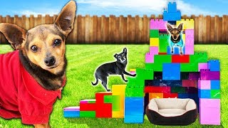 building-our-dogs-a-giant-pet-hotel-only-using-legos-pawzam-dogs