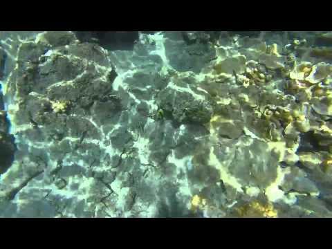 Snorkeling Kapoho Tidepools, Hawaii Island
