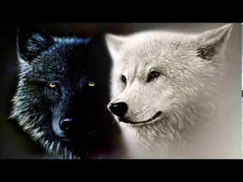 Yang Girl Wallpaper Dentro De Mim Existem Dois Lobos Youtube