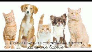 10 ИНТЕРЕСНЫХ ФАКТОВ о животных за 2 минуты