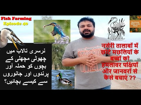 How To Protect Fish Seed From Birds,Snakes And Turtles |Sustainable Fish Farming|Fish Farming|Epi 40