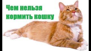 Чем нельзя кормить кошку. Ветеринарная клиника Био-Вет.