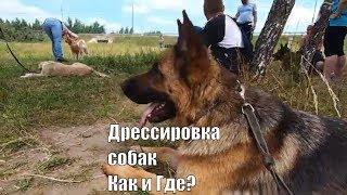 Площадка для дрессировки собак в Вялках, Егорьевское шоссе