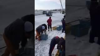 Японская рыбалка  - рыбалка, рыба, рыбак, русское видео о рыбалке,  улов