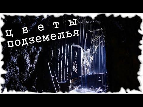 Страшные Истории На Ночь - Цветы Подземелья