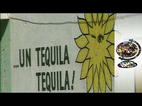 Mexico's Tequila Industry Hits Troubled Times (2001)