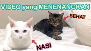 Download lagu PERKENALKAN KUCING AKU 僕の猫ちゃん達の紹介 MP3