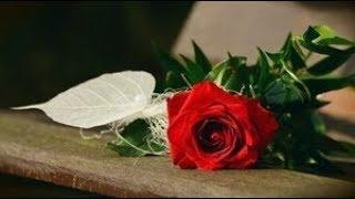 五月みどりさんと渥美二郎さんの「薔薇色の人生」女性パート歌ってみま...