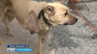 Защитники животных: брошенных собак и кошек стало больше