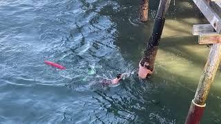 Gambar cover Redondo Beach Pier Rescue 9/29/19