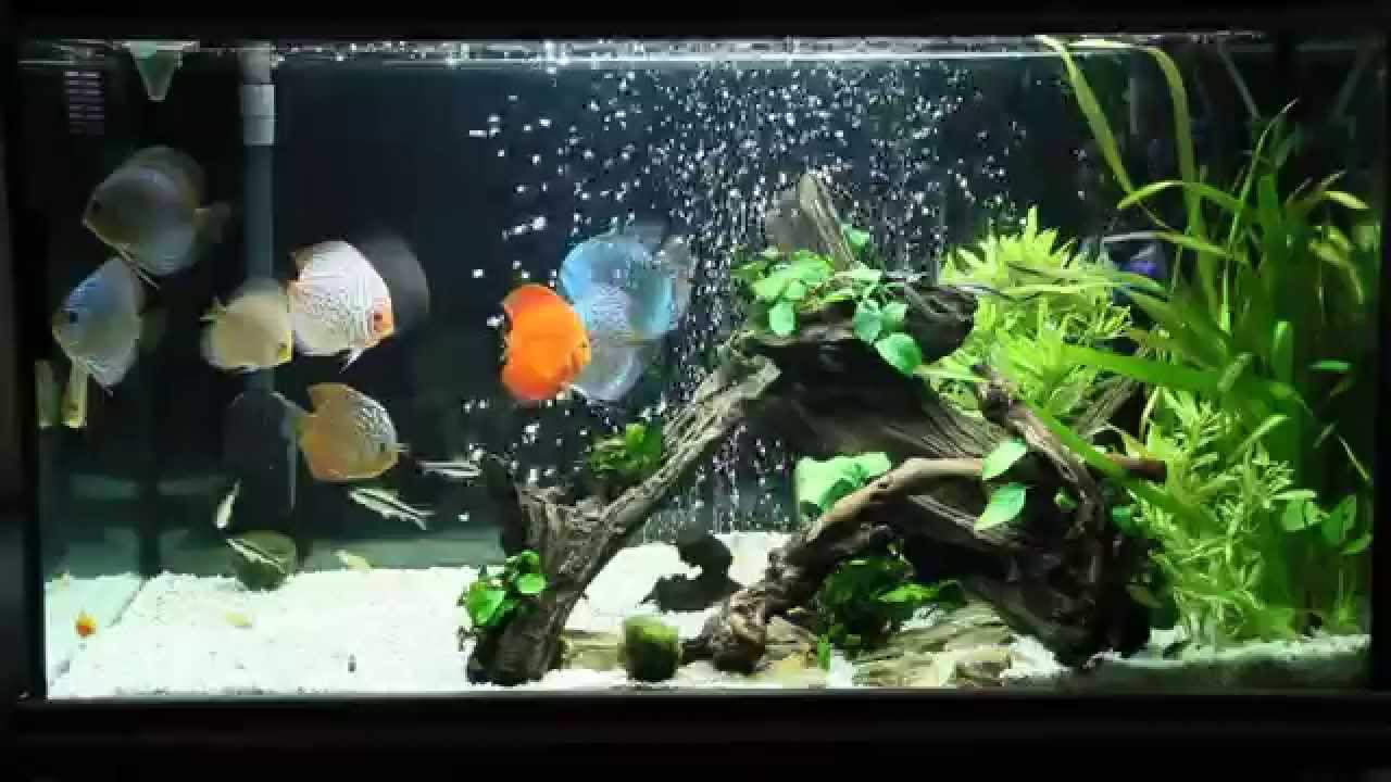 Discus fish aquarium setup images for Freshwater fish tank setup