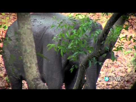 IFAW's Elephant PSA
