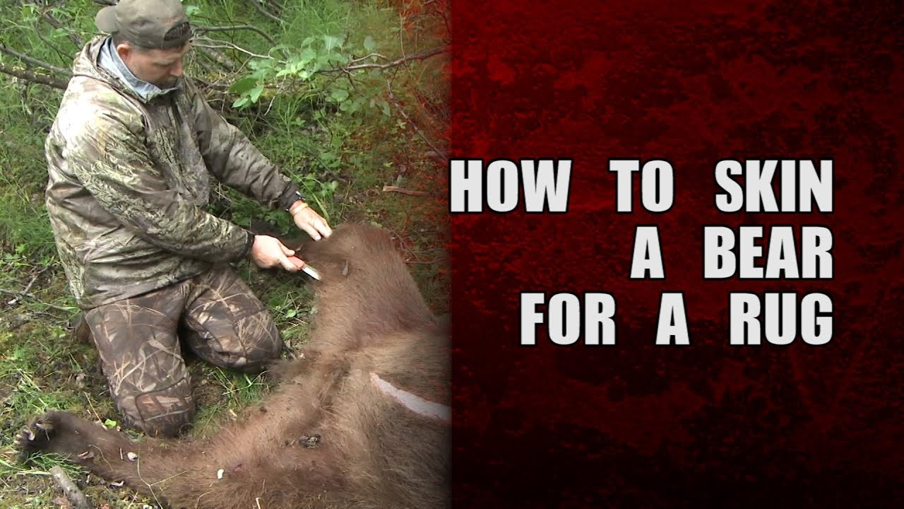 How to skin a bear for a rug (brown