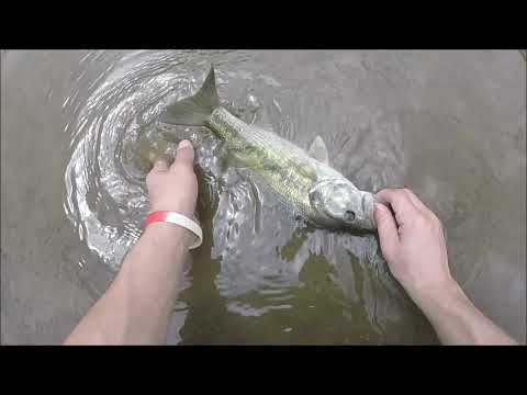 RURAL Mississippi Creek Fishing HD ~ Multi Species Action!!