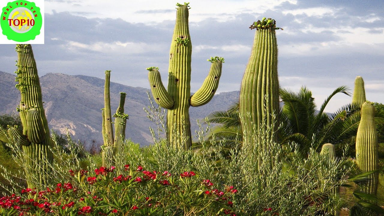 Spectacular Desert Plant Life - Amazing Nature - YouTube