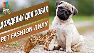 Дождевик для собак - Лилу | Обзор дождевика Лилу для собак | Pet Fashion raincoat fore dogs review