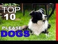 Top 10 Most People Pleasing Dog Breeds
