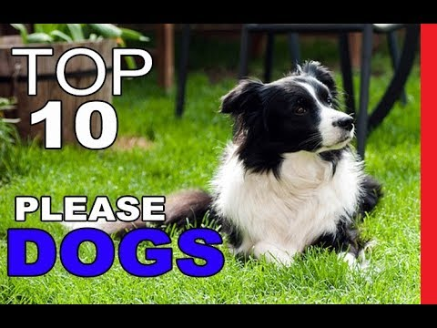 top-10-most-people-pleasing-dog-breeds
