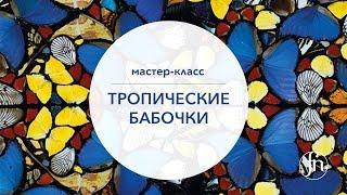 Дизайн ногтей бабочки:Ольга Ерохина [Fantasy Nails]