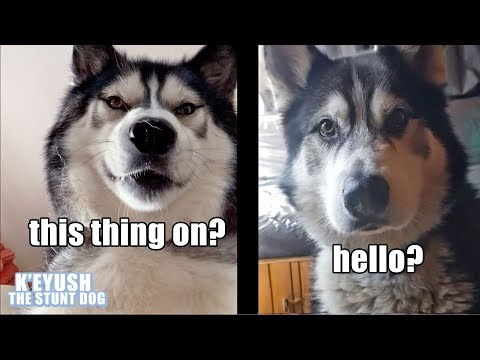 Husky Invites Best friend Over For Waffles To Celebrate 1M Subscribers!