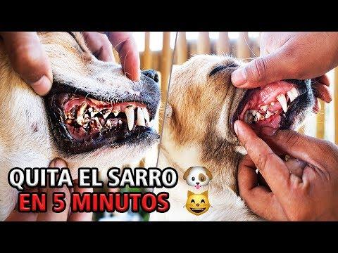 sarro dental en los perros